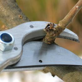 pruning-fundamentals-1